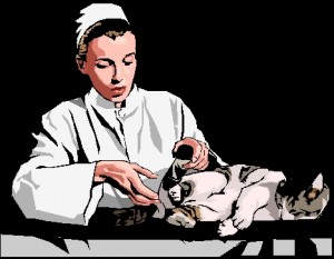cat and vet